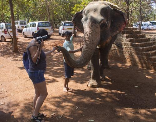 Слон для покатушек