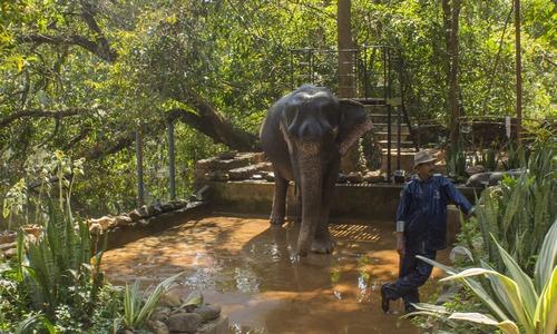 Поливальный слон