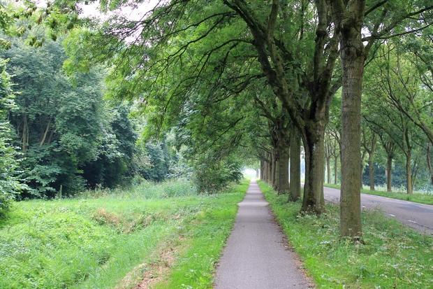 голландские дорожки
